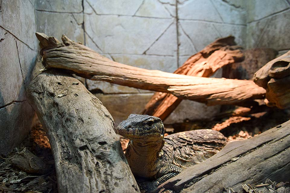 Lots of reptiles at the zoo